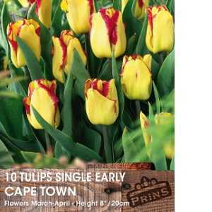 Tulip Bulbs Single Early Cape Town 10 Per Pack