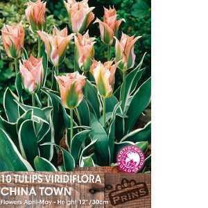Tulip Bulbs Viridiflora China Town 10 Per Pack