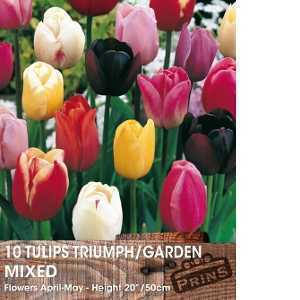 Tulip Bulbs Triumph/Garden Mixed 10 Per Pack