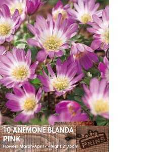 Anemone Bulbs Blanda Pink Charm 10 Per Pack