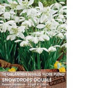 Galanthus Nivalis Bulbs Flore Pleno Snowdrops Double White Flower 10 Per Pack