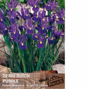 Iris Dutch Iris Bulbs Purple 20 Per Pack