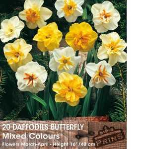 Daffodil Bulbs Butterfly Mixed Colours 20 Per Pack