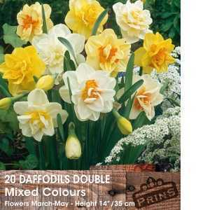 Daffodil Bulbs Double Mixed Colours 20 Per Pack