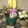 Lamium Maculatum Beacon Silver 1ltr