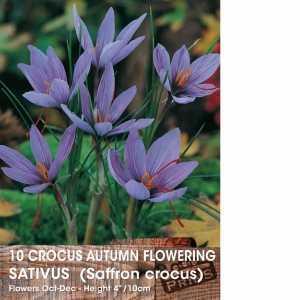 Crocus Bulbs Autumn Flowering Sativus (Saffron Crocus) 10 Per Pack