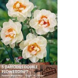 Daffodil Bulbs Double Flowerdrift 5 Per Pack