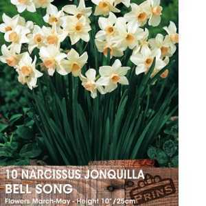 Narcissus Jonquilla Bulbs Bell Song 10 Per Pack