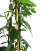 Lonicera Honeysuckle Similis var. Delavayi 3 Ltr