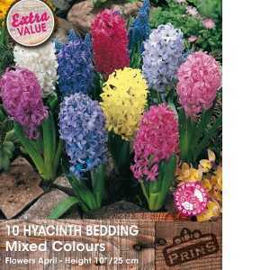 Hyacinth Bedding Bulbs Mixed Colours 10 Per Pack