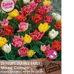 Tulip Bulbs Double Early Mixed Colours 25 Per Pack