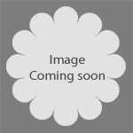 Berberis Thunbergii Golden Dream 3.5Ltr