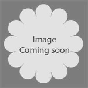 Laurus Nobilis 3/4 Standard Spiral Stem (Bay Tree) 15 litre Pot