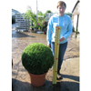 Buxus Sempervirens Ball /Topiary Ball) 60-65cm Set of 2