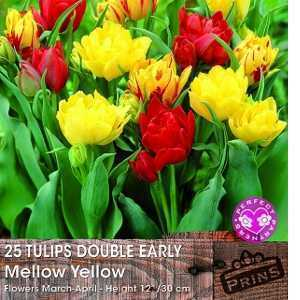 Tulip Bulbs Double Early Mellow Yellow 25 Per Pack