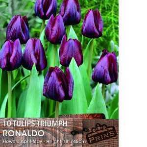Tulip Bulbs Triumph Ronaldo 10 Per Pack