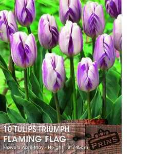 Tulip Bulbs Triumph Flaming Flag 10 Per Pack
