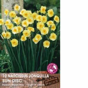Narcissus 'Sun Disc' Potted Bulbs 13cm