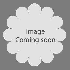 Taxus Baccata Fastigiata Aurea (Golden Irish Yew) 120-130 height 35Ltr