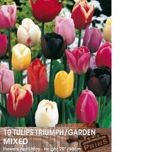Tulip Bulbs Triumph Garden Mixed 50 per pack