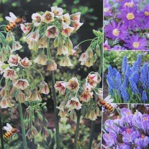Nectaroscordum, Anemone, Muscari and Crocus Bulbs Happy Bee Collection 50 per pack