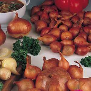 Shallots Red Sun Bulbs 25 Per Pack