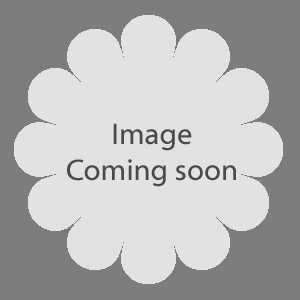 Rose 1/2 Standard Blessings Hybrid Tea 80cm Clear Stem 7.5ltr