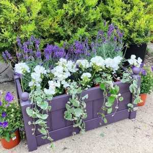 AFK Garden - Classic Painted Troughs Lavender 26 Inch