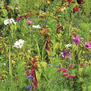 RHS Flowers For Birds Seed Collection