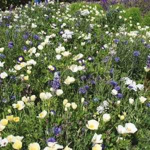 RHS Flowers for Wildlife Cool Mix Seed Collection