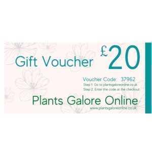 £20.00 Plants Galore Gift Voucher