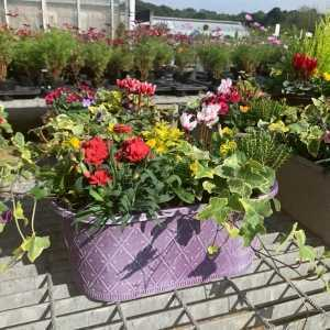 Mixed Autumn Planted Troughs