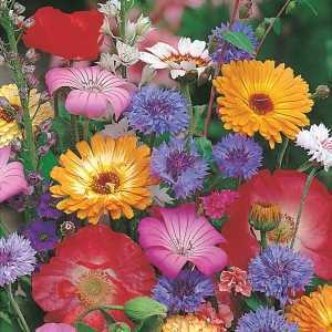 RHS Cottage Garden Mix Seed Collection