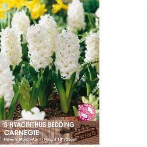 Hyacinth Bedding Bulbs Carnegie 5 Per Pack