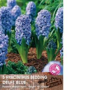 Hyacinth Bedding Bulbs Delft Blue 5 Per Pack