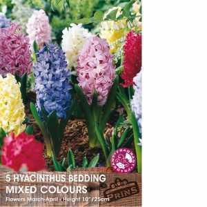 Hyacinth Bedding Bulbs Mixed 5 Per Pack