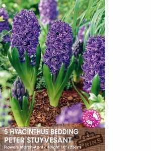 Hyacinth Bedding Bulbs Peter Stuyvesant 5 Per Pack