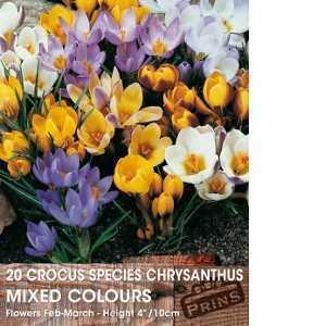 Crocus Bulbs Species Chrysanthus Mixed 20 Per Pack