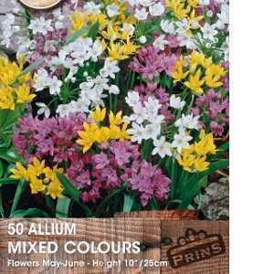 Allium Bulbs Mixed 50 Per Pack