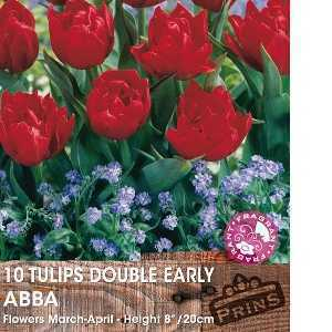 Tulip Bulbs Double Early Abba 10 Per Pack