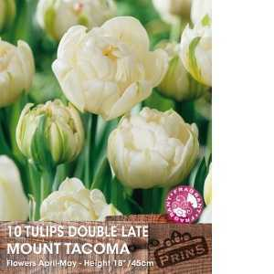 Tulip Bulbs Double Late Mount Tacoma 10 Per Pack