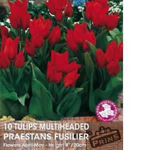 Tulip Bulbs Multiheaded Praestans Fusilier 10 Per Pack