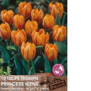 Tulip Bulbs Triumph Princess Irene 10 Per Pack