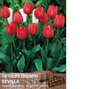 Tulip Bulbs Triumph Sevilla 10 Per Pack