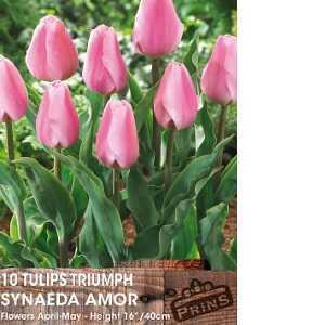 Tulip Bulbs Triumph Synaeda Amor 10 Per Pack