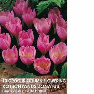 Crocus Bulbs Autumn Flowering Kotschyanus Zonatus 10 Per Pack