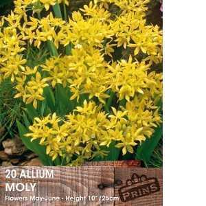 Allium Bulb Moly 20 Per Pack