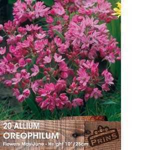 Allium Bulb Oreophilum 20 Per Pack