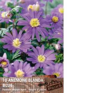 Anemone Bulbs Blanda Blue 10 Per Pack
