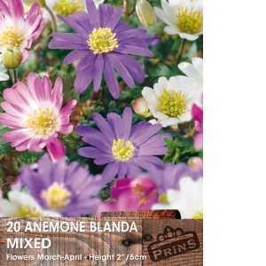 Anemone Bulbs Blanda Mixed 15 Per Pack